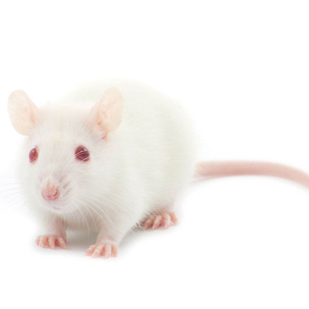 Scientists implant false memories in mouse's brain