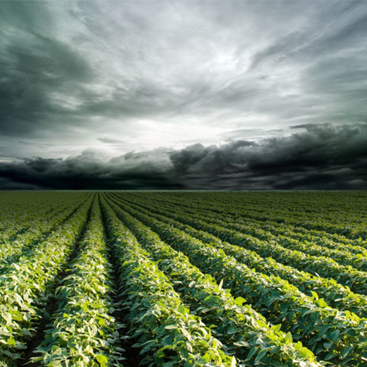 Monsanto's scary new scheme: Why does it <em>really</em> want all this data?