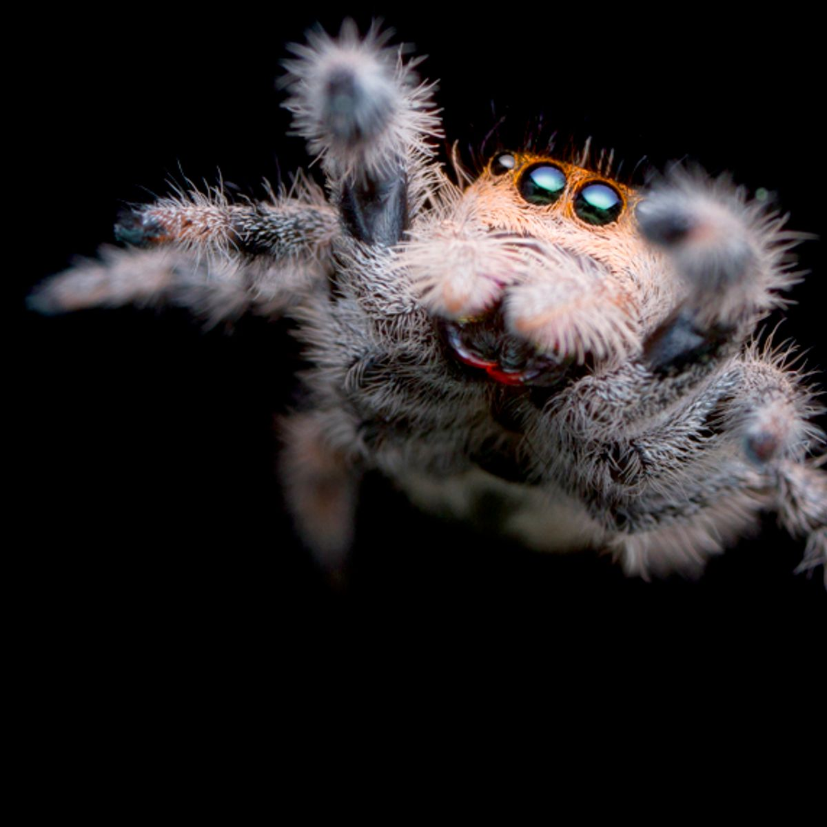 """Scientists demand """"paradigm shift"""" after study shows """"frightening"""" decline of insects and spiders"""