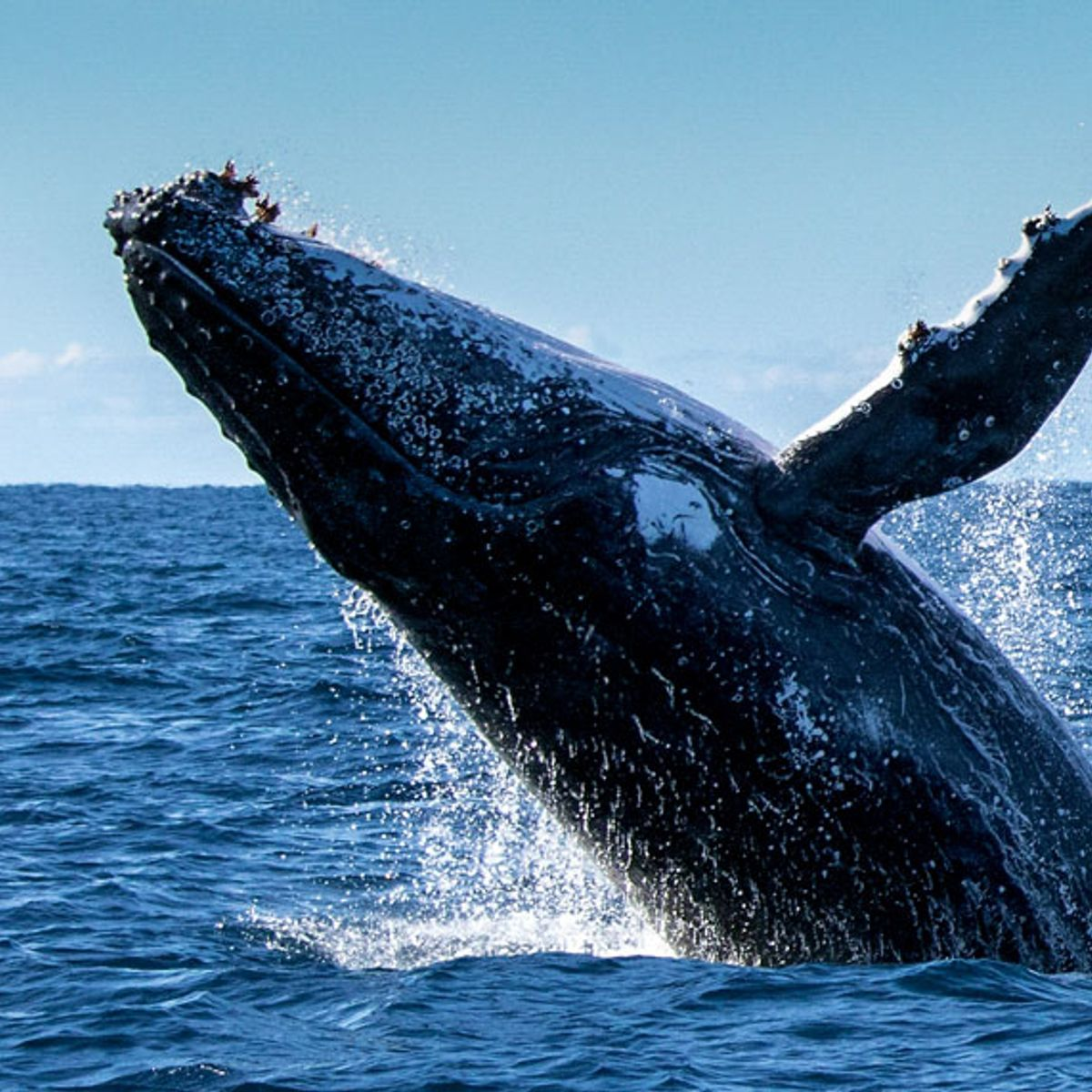 Iceland didn't hunt any whales in 2019 — and public appetite for whale meat is fading
