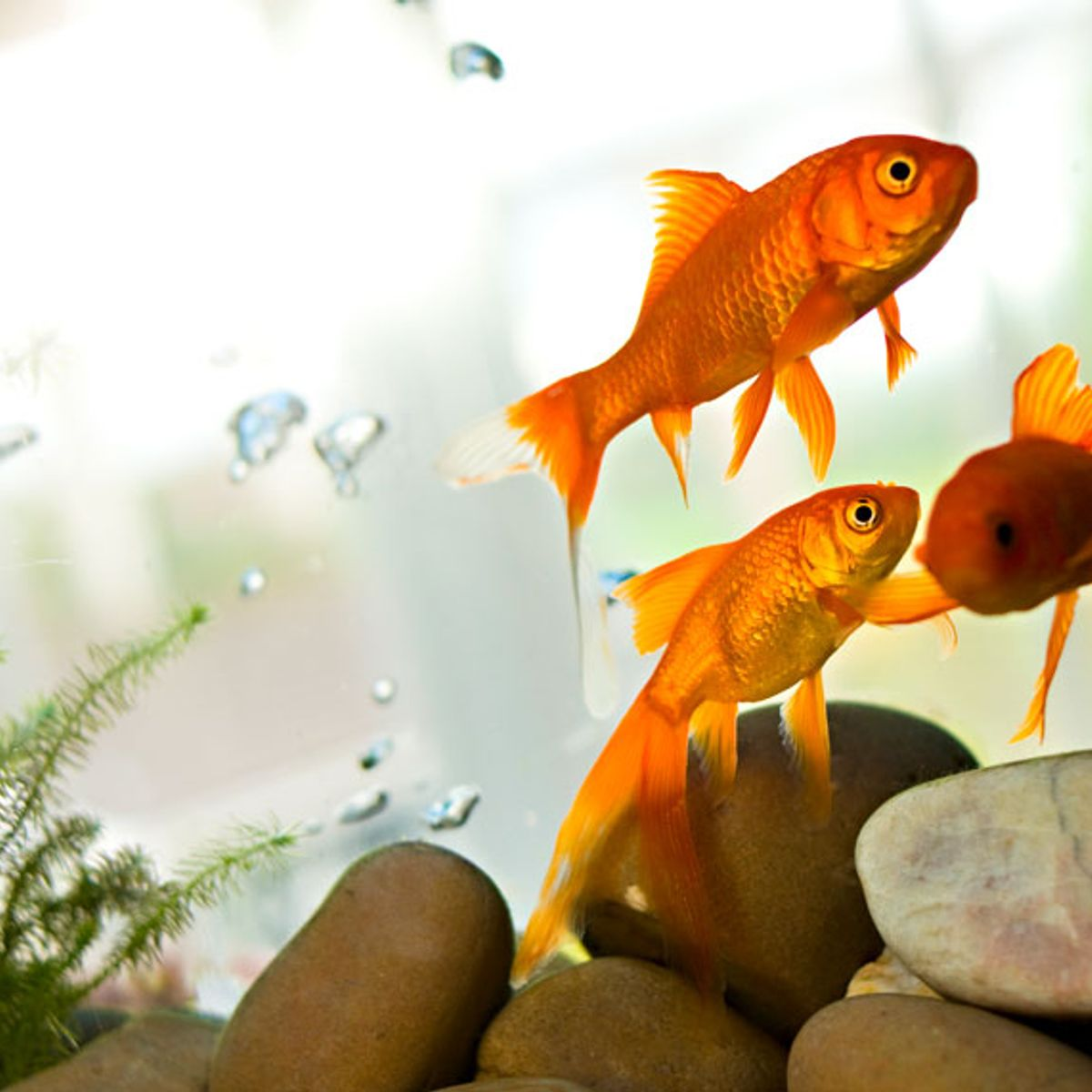 Is it silly to mourn a goldfish — or to wonder what our pets are thinking in general?