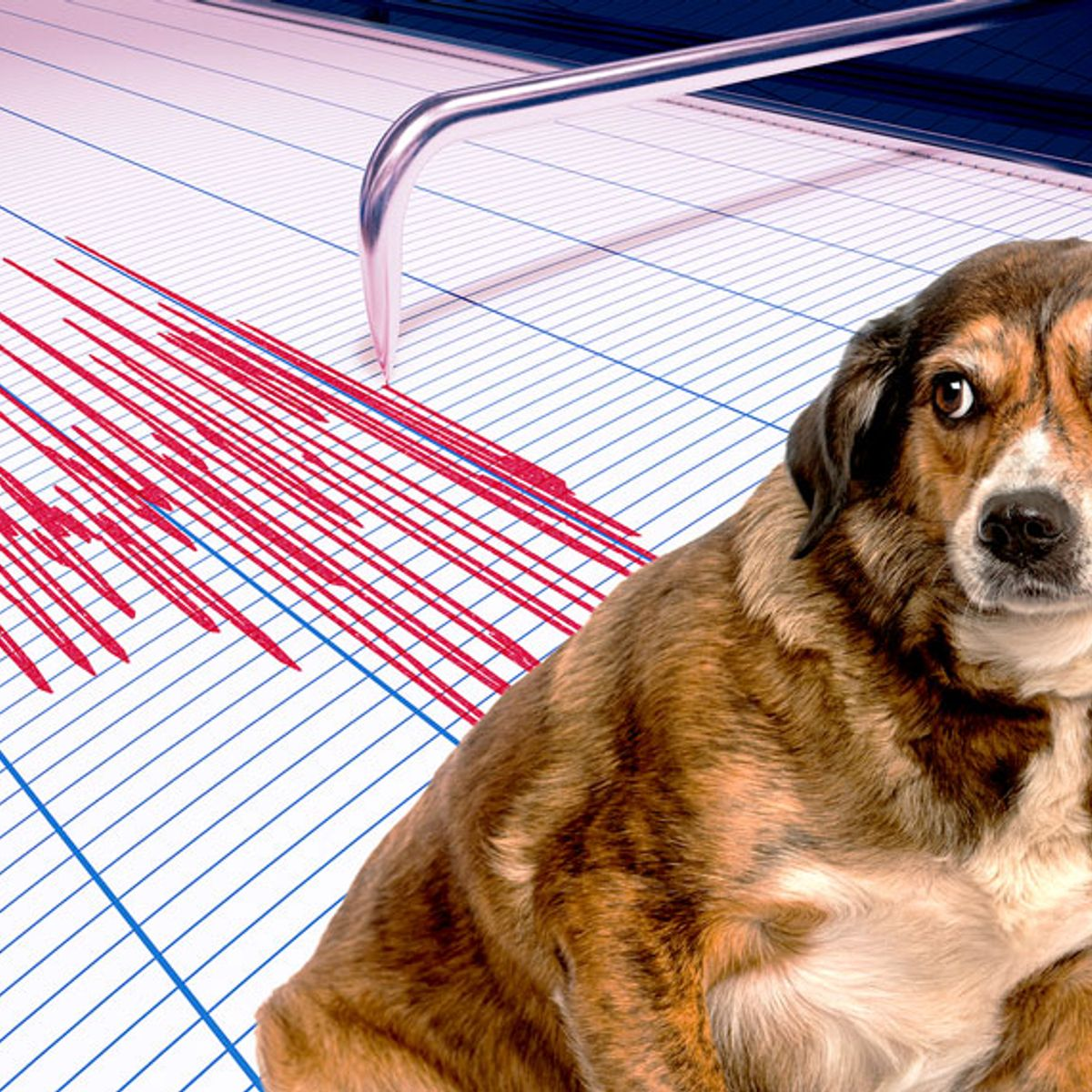 Can dogs predict when earthquakes will happen?