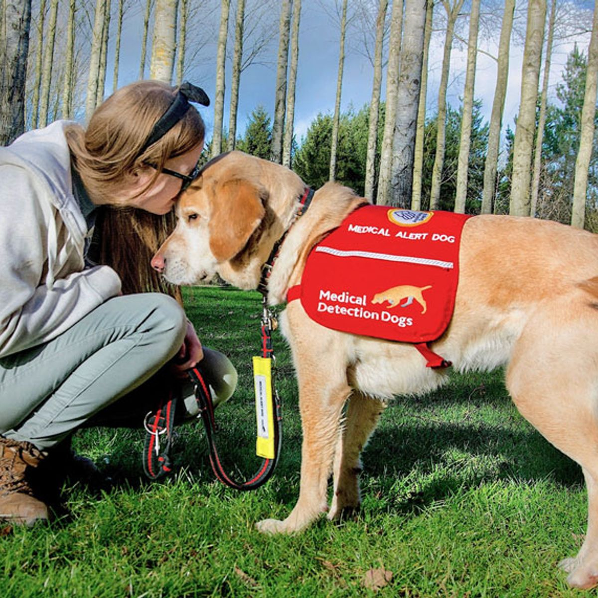 Scientists Are Studying Whether Dogs Can Help Sniff Out Coronavirus Salon Com