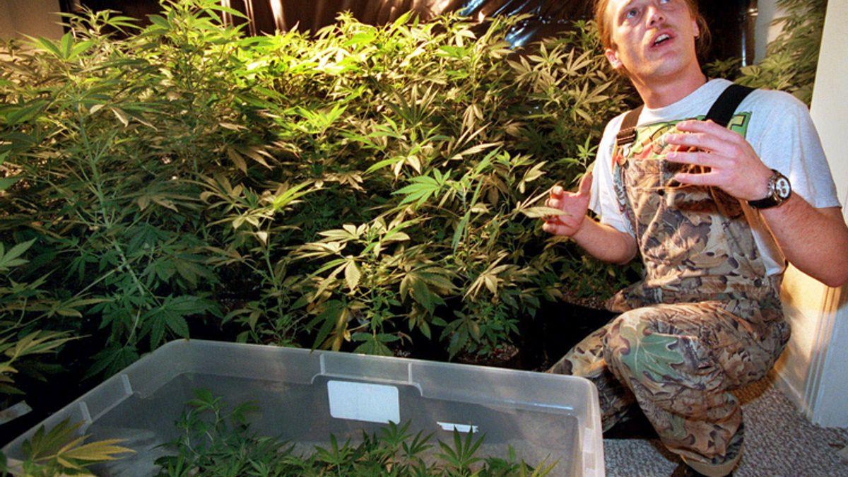 Naked girls in a pot farm How Humboldt Became America S Marijuana Capital Salon Com