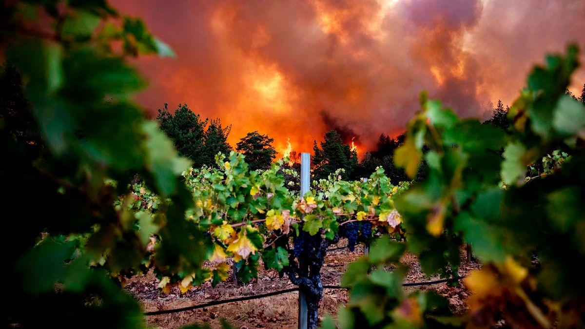 salon.com - Matthew Rozsa - Can California's wine country survive the climate crisis?