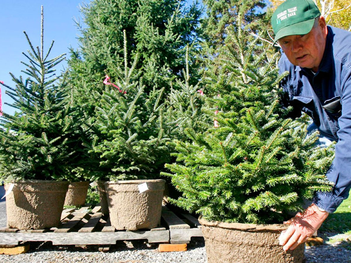 artificial or farmed christmas tree