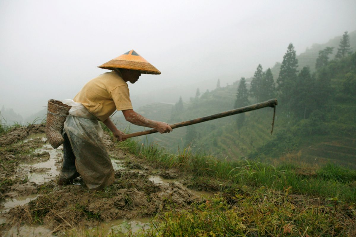 A farmer from the Zhuang ethnic minority works at his rice terrace near Pingan Village in Longsheng in southwest China's Guangxi Zhuang Autonomous Region May 25, 2007. Picture taken May 25, 2007. REUTERS/Nir Elias (CHINA)  (© Nir Elias / Reuters)