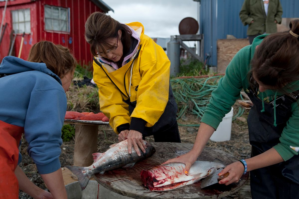 DILLINGHAM, ALASKA -JULY 05 2010: Sarah Palin guts and cuts salmon with cousin Ina Bouker, in red bandana, in Ekok, a small fishing village . Bouker spends the summer in Ekok,,  fishing, cutting and drying salmon.   (Gilles Mingasson/getty Images)