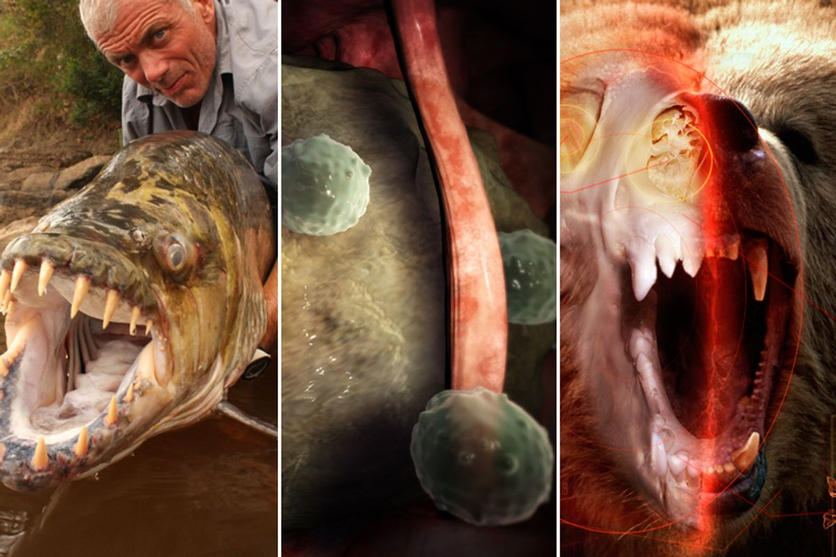 """From left: """"River Monsters,"""" """"Monsters Inside Me"""" and """"I, Predator"""""""