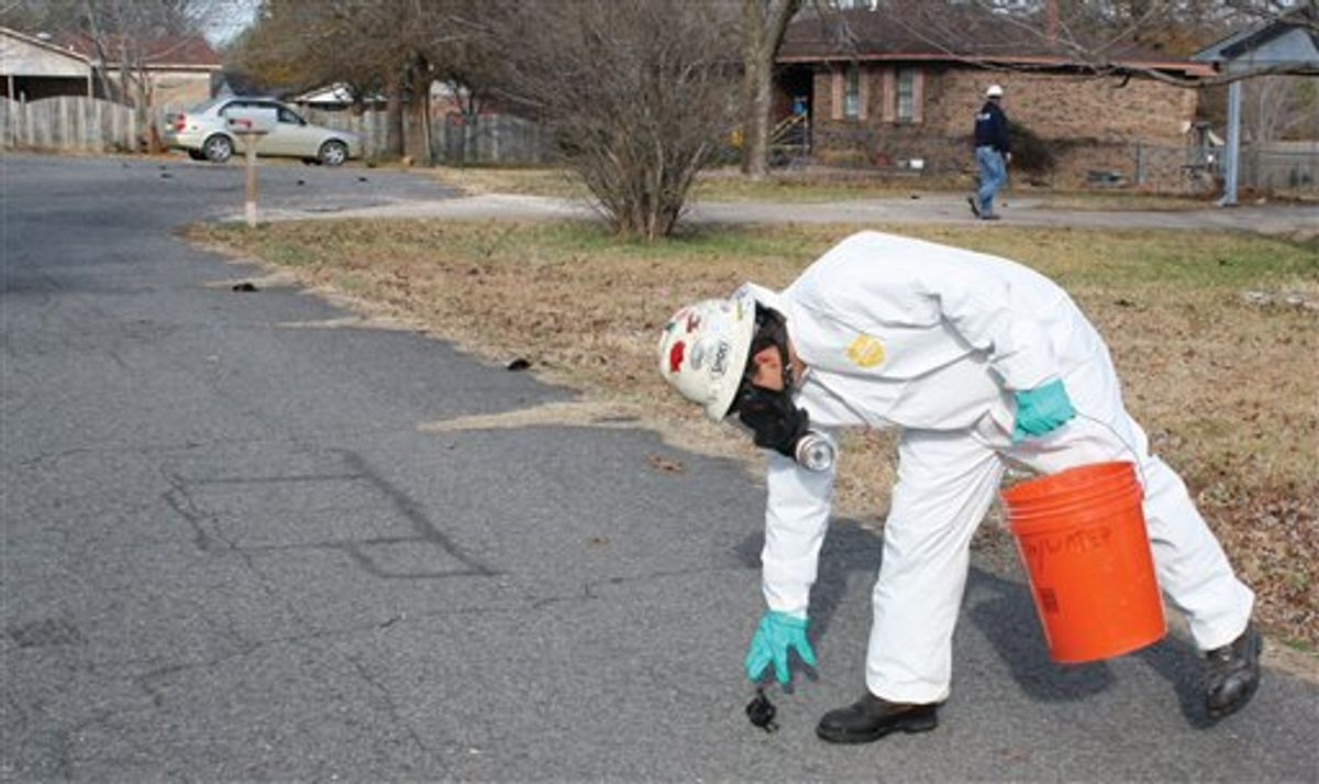 A worker with U.S. Environmental Services, a private contractor, picks up a dead bird in Beebe, Ark. on Saturday, Jan. 1, 2011 as more can be seen on the street behind him. The Arkansas Game and Fish Commission said Saturday more than 1,000 dead black birds fell from the sky in Beebe. The agency said its enforcement officers began receiving reports about the dead birds about 11:30 p.m. Friday. (AP Photo/The Daily Citizen, Warren Watkins) RETRANSMISSION FOR LARGER FILE (AP)