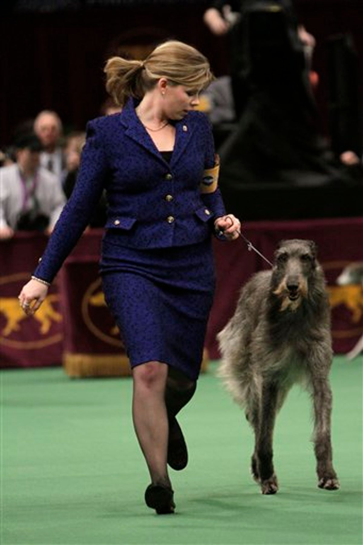 Scottish deerhound Foxcliffe Hickory Wind is led in the ring during competition at the 135th Westminster Kennel Club Dog Show on Monday, Feb. 14, 2011, at Madison Square Garden in New York. The dog won the hound division. (AP Photo/Mary Altaffer) (AP)