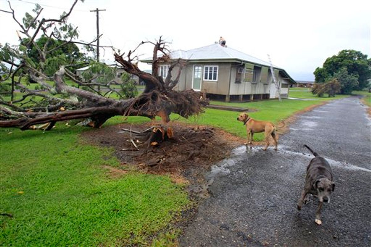 A man works to repair damage to the roof of his house while his dogs inspect a fallen tree in Kamma, Australia, Thursday, Feb. 3, 2011, after Cyclone Yasi brought heavy rain and howling winds gusting to 186 mph (300 kph). The massive cyclone struck northeastern Australia early Thursday, tearing off roofs, toppling trees and cutting electricity to more than 170,000 people, the most powerful storm to hit the area in nearly a century. (AP Photo/Rick Rycroft)  (AP)