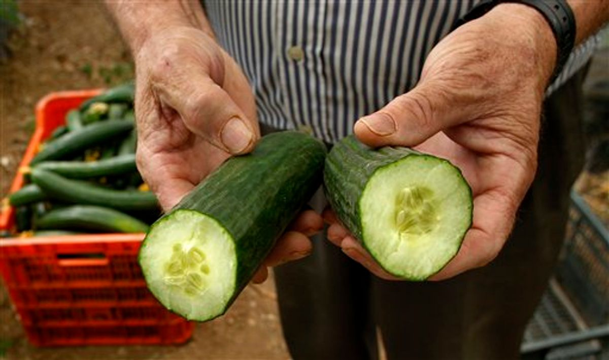 A farm worker shows a cucumber cut in half in a greenhouse in Algarrobo, near Malaga, southern Spain, on Tuesday, May 31, 2011. Angry Spanish farmers whose produce has been cited as a possible source of the deadly bacterial infection in Europe are watching in despair as machines grind their suddenly unwanted fruit and vegetables into compost and are particularly livid with Germany. Spanish agriculture associations accuse German officials of being trigger-happy in singling out two Spanish farm produce companies as sources of cucumbers tainted with E. coli before ascertaining if the vegetables were contaminated before leaving Spain or along the transport chain or while being handled in Germany itself.  (AP Photo/Sergio Torres) (AP)