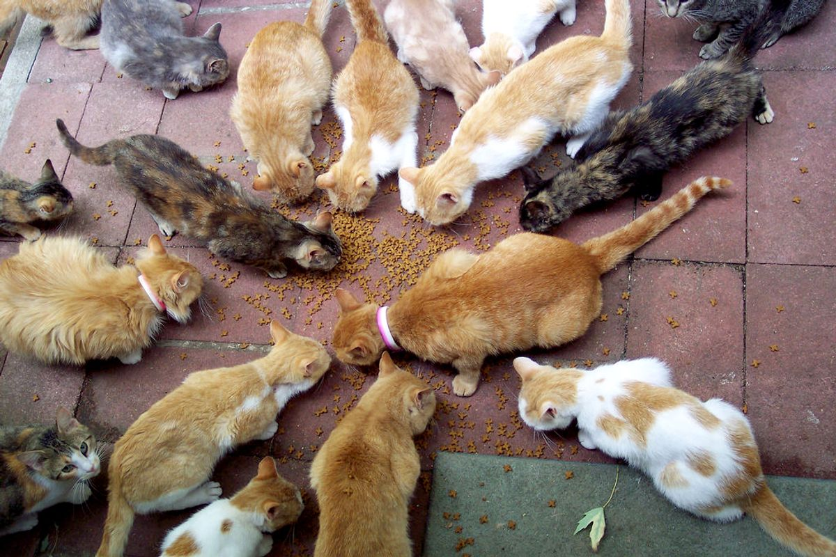 Feeding time for all my friends.