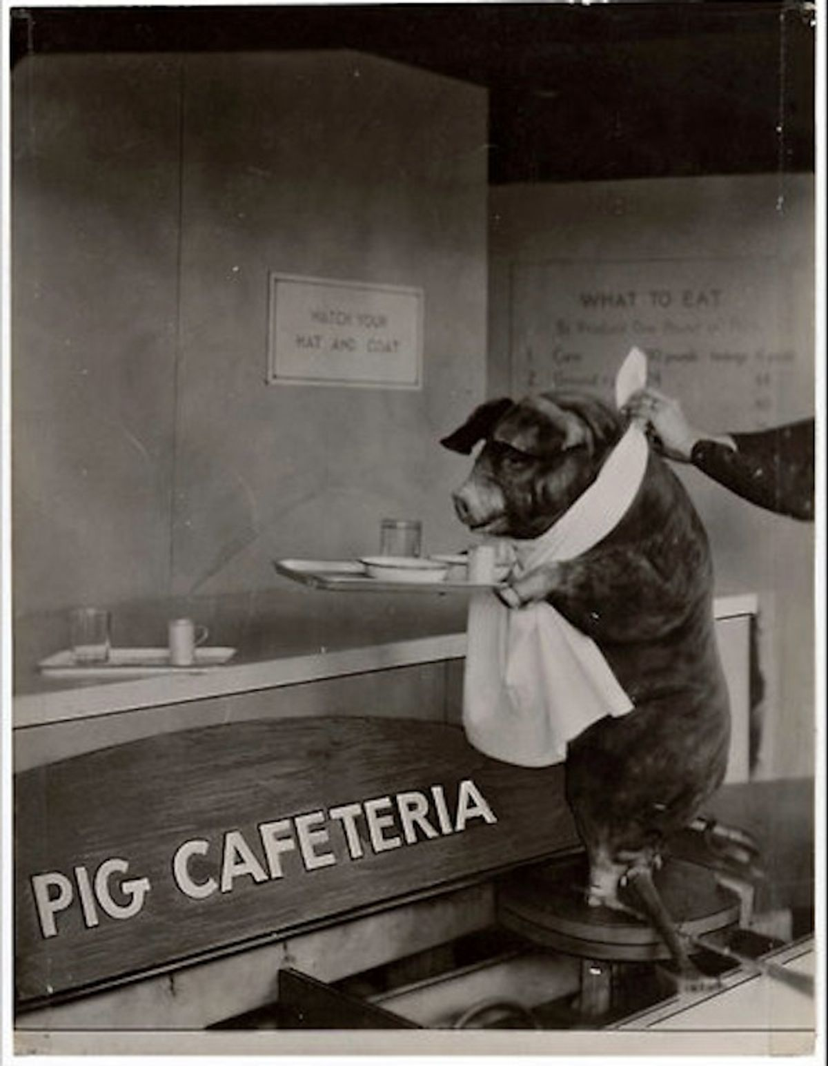 Government's attempts to explain healthy pig diet through motivational poster goes awry.