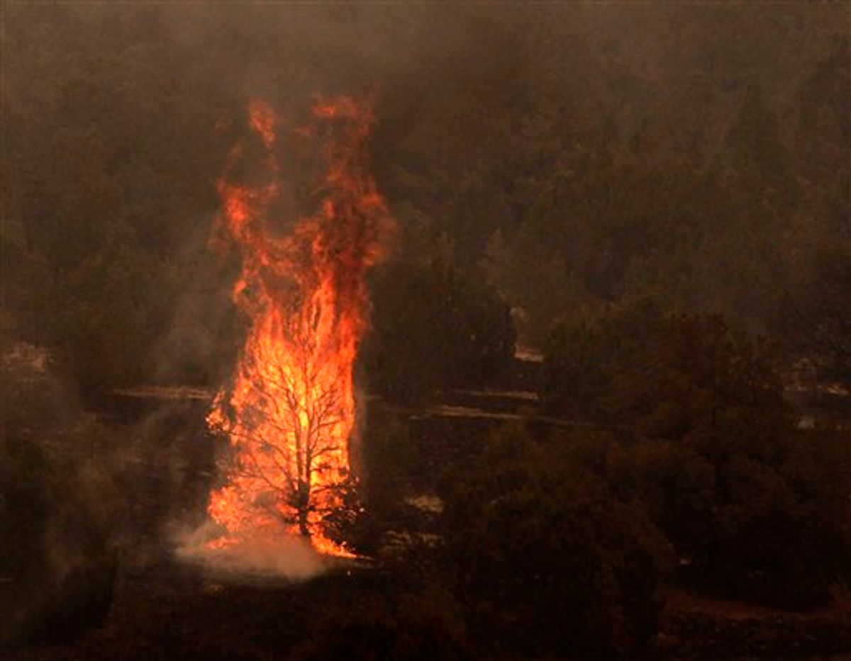 A tree burns during the Wallow fire in the Apache-Sitgreaves National Forest near Springerville, Ariz., Tuesday, June 7, 2011. Officials say the blaze has already burned 486 square miles and winds have been driving the flames 5 to 8 miles a day since the fire began a week ago. (AP Photo/Jae C. Hong)  (AP)