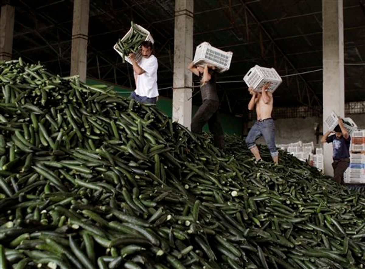 Men carry cucumbers collected for destruction at a greenhouse compound outside Bucharest, Romania, Monday, June 6, 2011. Producers destroyed thousands of tons of cucumbers over the past two days, according to local media, after their production was either turned back from exports or refused for sale by supermarkets in Romania for fear of E. coli bacteria contamination. The current crisis is the deadliest known E. coli outbreak, killing at least 22 people and sickening more than 2,300 across Europe. (AP Photo/Vadim Ghirda) (AP)