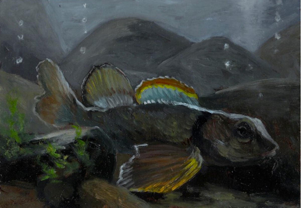 """""""Variagate Darter 2,"""" a painting from an exhibition, sponsored by the Mountain Institute, called <a href=""""http://web.me.com/paynestake/Homage_to_Dunkard_Creek/Reflections_Gallery.html#0"""">""""Reflections: Homage to Dunkard Creek""""</a> that commemorates the dozens of species that died in the river kill."""