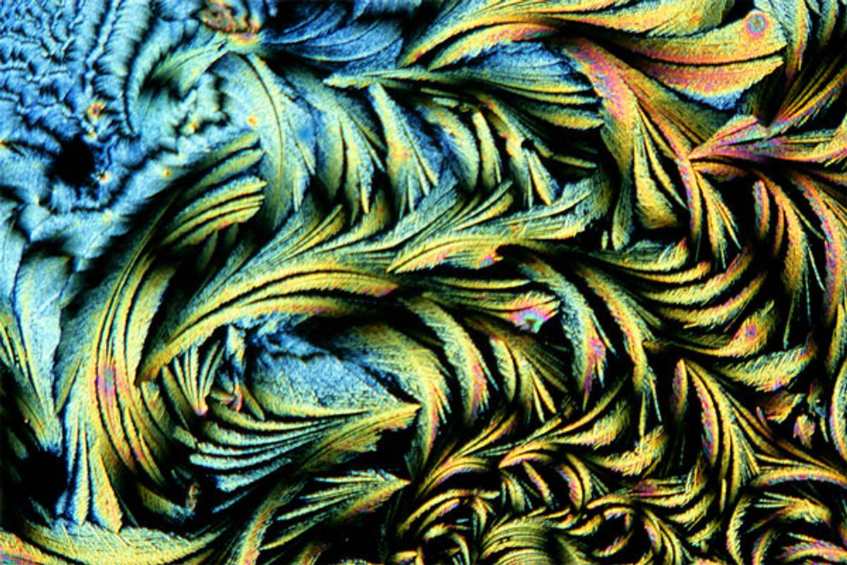 """Spike Walker, """"Quinidine Crystals,"""" 2006. Polarised light micrograph.       (Spike Walker, Wellcome Images, London)"""