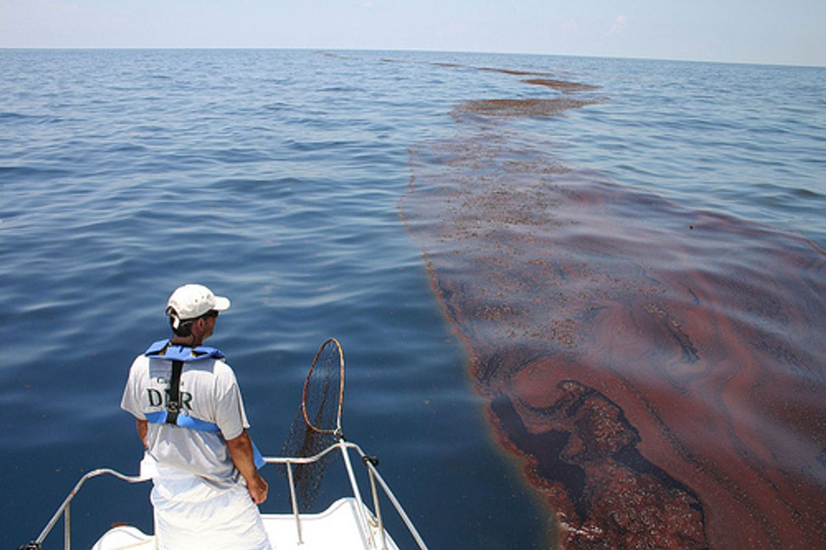 Mark Dodd, wildlife biologist from Georgia's Department of Natural Resources, surveying oiled sargassum in the Gulf of Mexico (Georgia Department of Natural Resources)