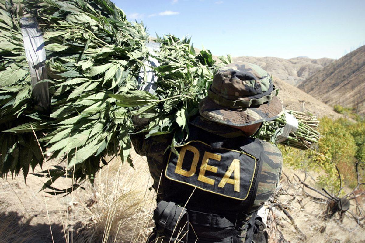 A DEA agent carries a bundle of marijuana.   (AP/Elaine Thompson)