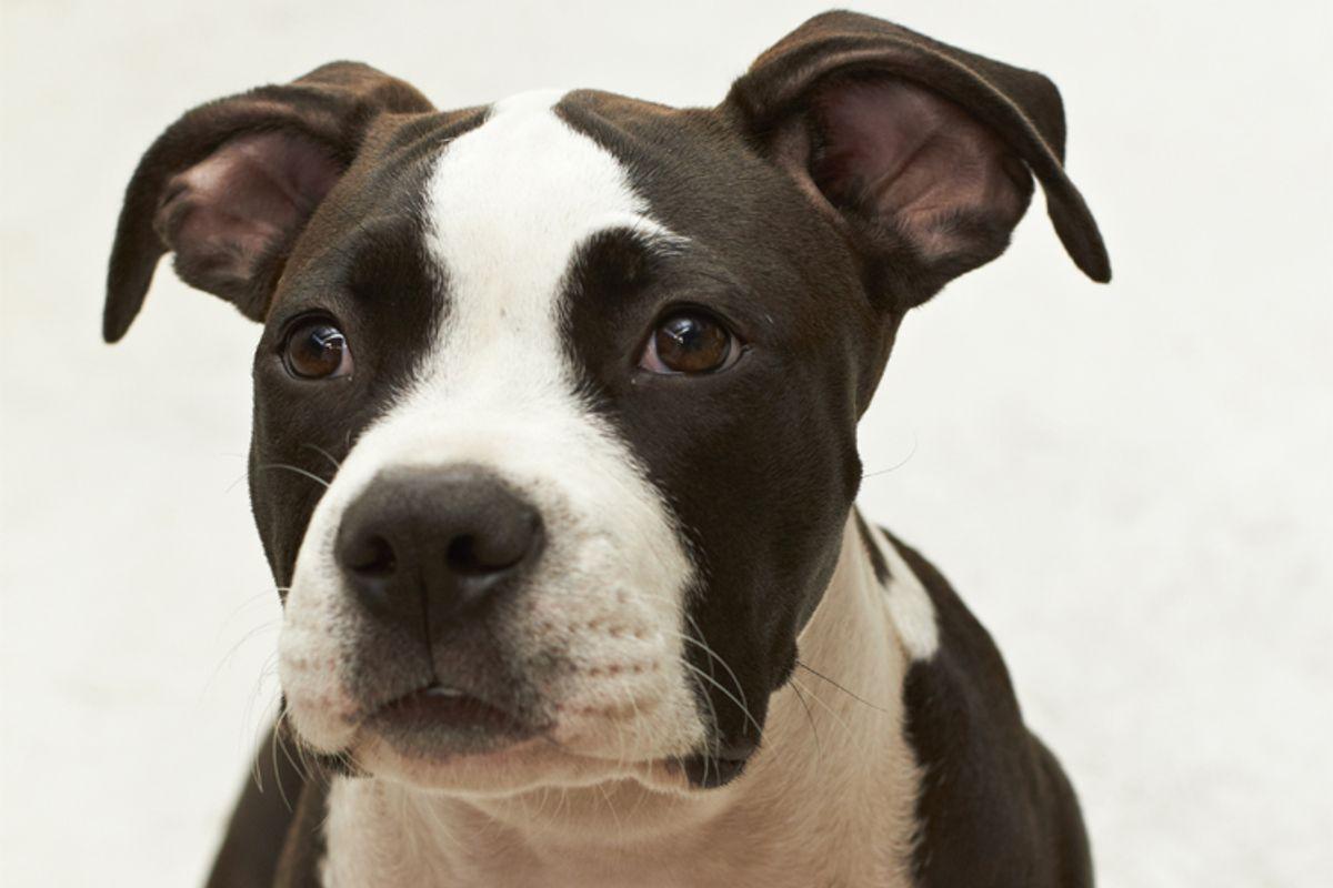 (<a href='http://www.shutterstock.com/gallery-81417p1.html'>dogboxstudio</a> via <a href='http://www.shutterstock.com/'>Shutterstock</a>)