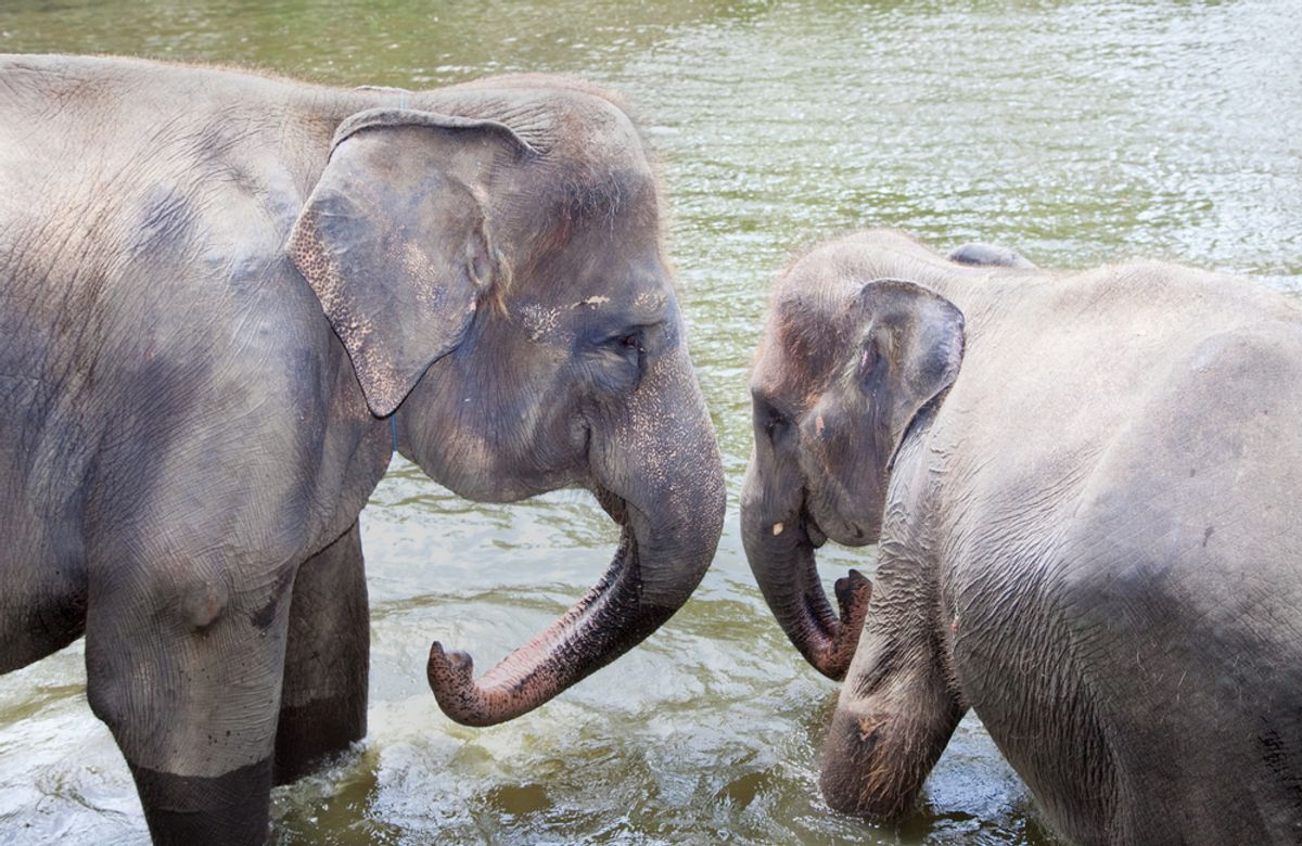 Two young elephants in Bali, Indonesia   (Aleksandar Todorovic/Shutterstock)
