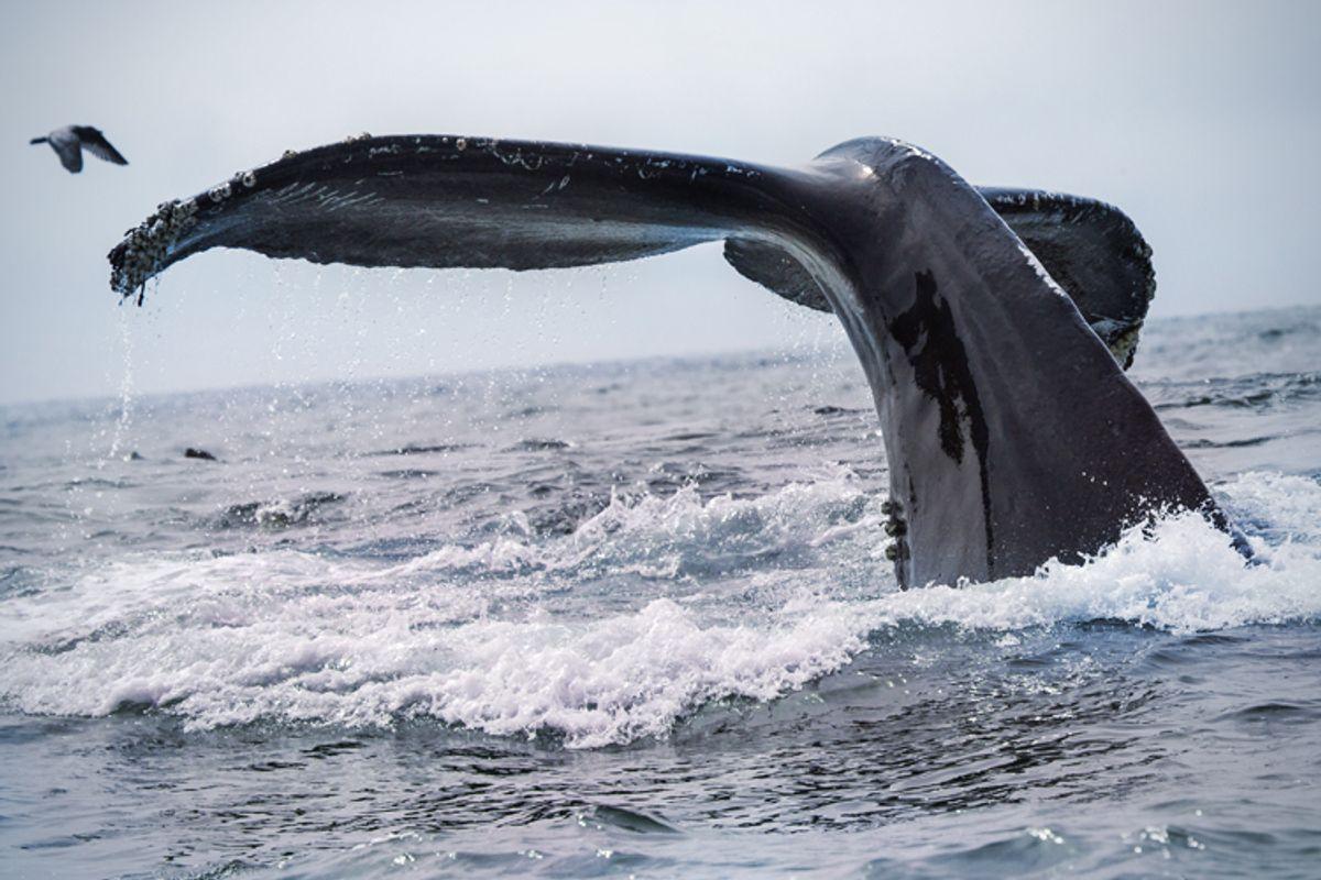 (<a href='http://www.shutterstock.com/gallery-360898p1.html'>Tory Kallman</a> via <a href='http://www.shutterstock.com/'>Shutterstock</a>)