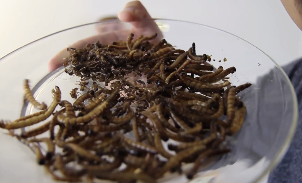 A plate of roasted insects (Screenshot AsapTHOUGHT)