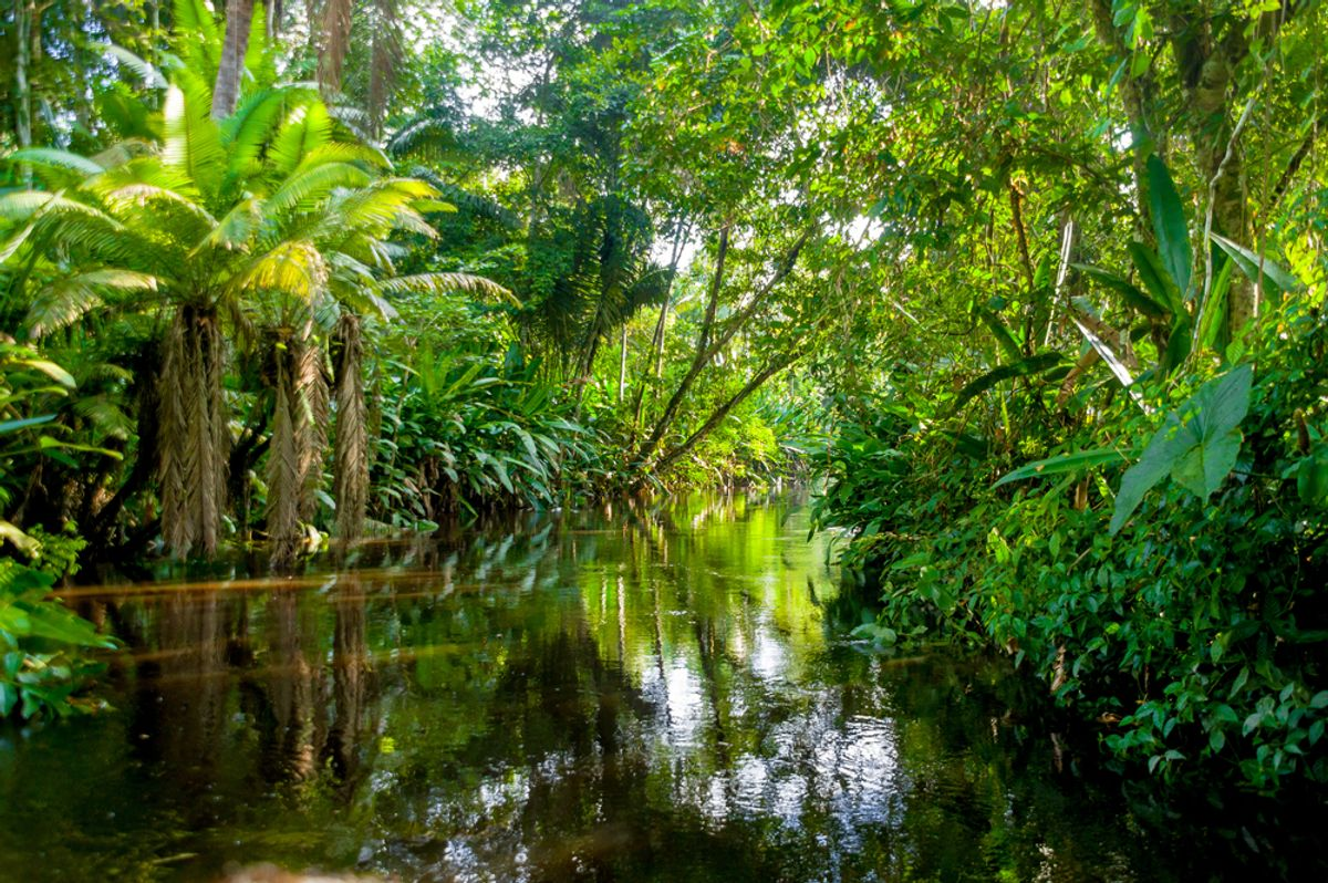Yasuni, Ecuador   (Pablo Hidalgo/Shutterstock)