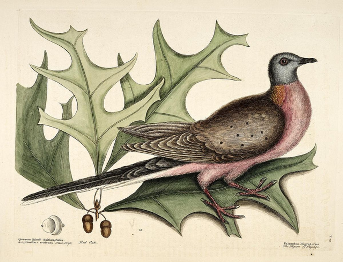 (Biodiversity Heritage Library via Flickr)