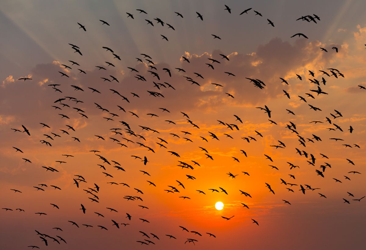 (<a href='url to photographer'>muratart</a> via <a href='http://www.shutterstock.com/'>Shutterstock</a>)
