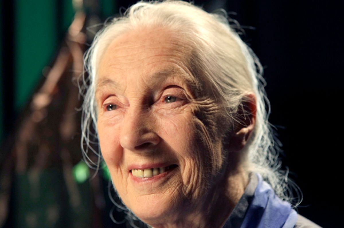 Dr. Jane Goodall         (AP/Kathy Willens)