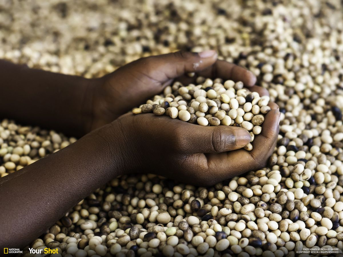 A child displaying a handful of soy beans that will be part of their daily food. (Photograph and caption by Richard Snyder/National Geographic Your Shot)