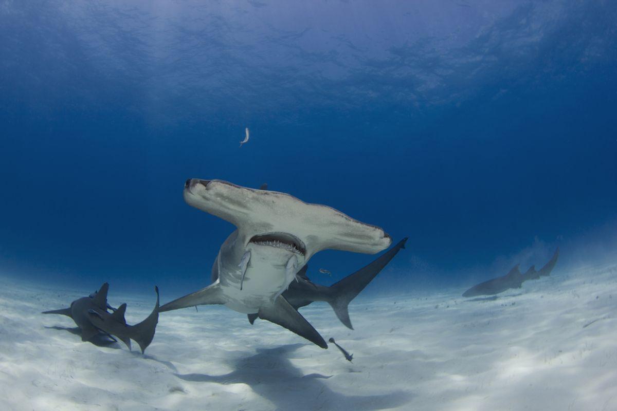 (<a href='url to photographer'>Matt9122</a> via <a href='http://www.shutterstock.com/'>Shutterstock</a>)