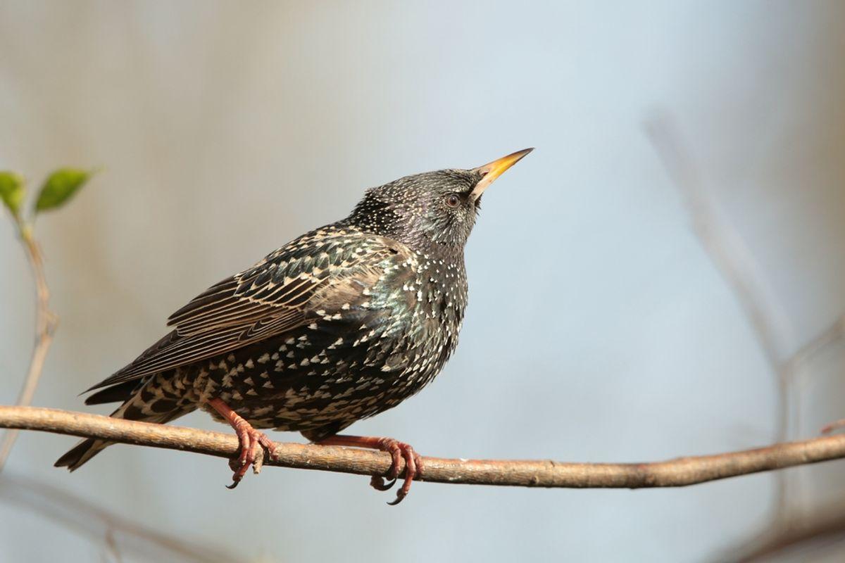 (<a href='url to photographer'>Paul Aniszewski</a> via <a href='http://www.shutterstock.com/'>Shutterstock</a>)