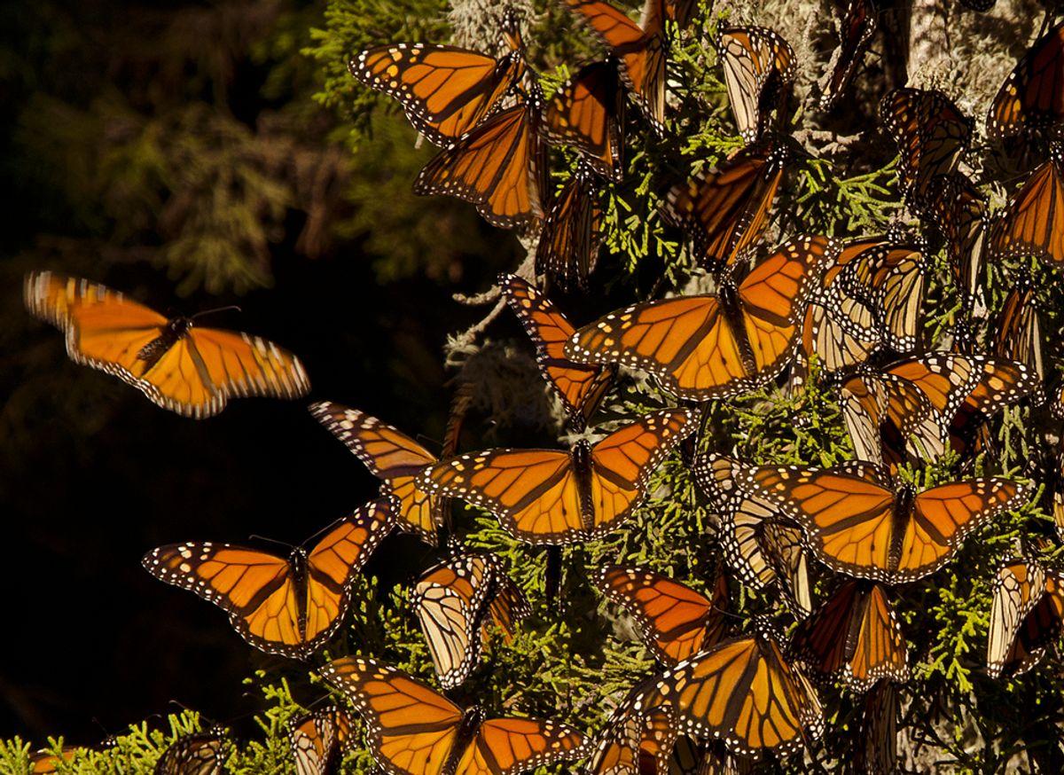 (<a href='url to photographer'>Michael Warwick</a> via <a href='http://www.shutterstock.com/'>Shutterstock</a>)
