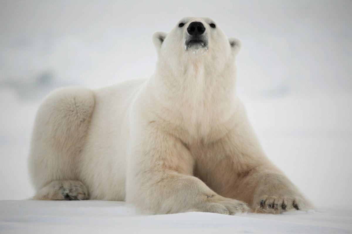 (Incredible Arctic/Shutterstock)