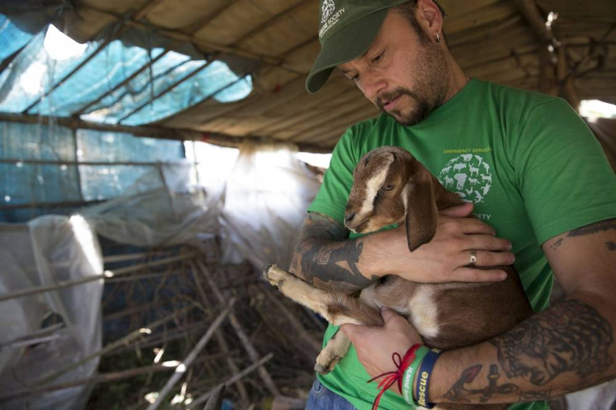 KATHMANDU, NEPAL-- May 1, 2015--Team  from Humane Society International doing assessments and rescue work in the Lalipur District outside Kathmandu where many houses collapsed and animals died during last week's earthquake.     (Jodi Hilton)