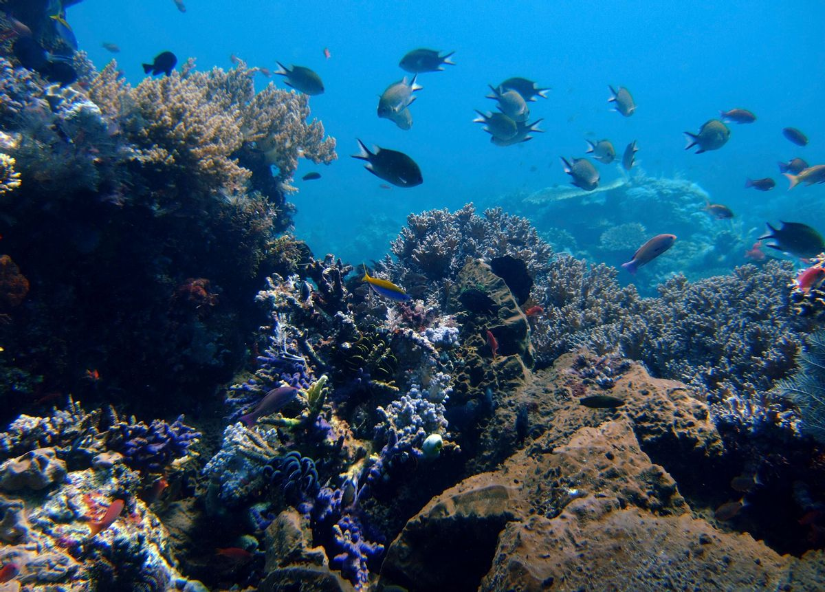 In this April 30, 2009 file photo, coral reefs grow in the waters of Tatawa Besar, Komodo islands, Indonesia. Rising demand for copper, cobalt, gold and the rare-earth elements vital in manufacturing smartphones and other high-tech products is causing a prospecting rush to the dark seafloor thousands of meters (yards) beneath the waves. The Jamaica-based International Seabed Authority has issued 27 separate 15-year contracts that allow for mineral prospecting on over 1 million square kilometers (over 390,000 sq. miles) of seabed in the Pacific, Atlantic and Indian Oceans. (AP Photo/Dita Alangkara, File) (AP)