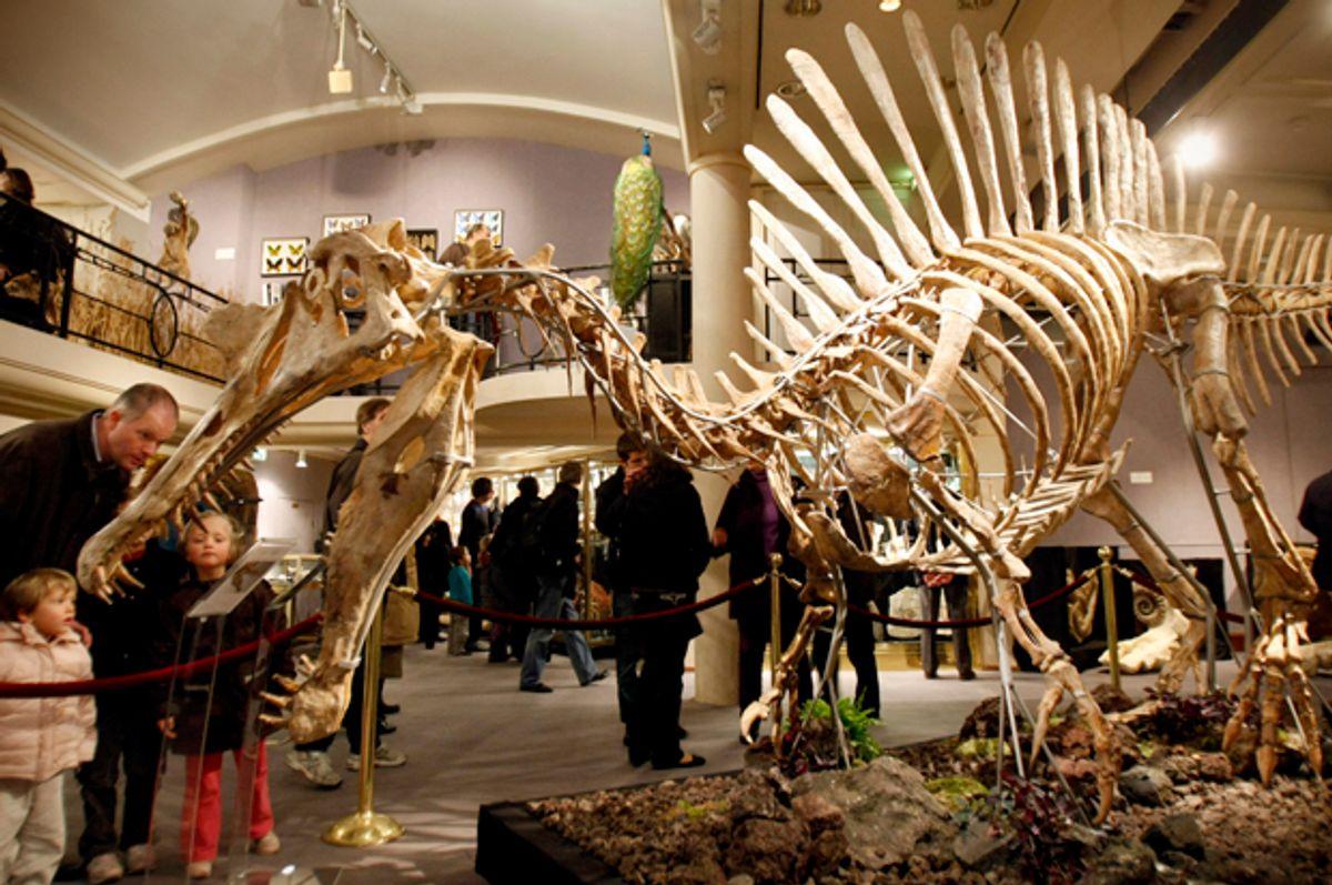 The skeleton of a prehistoric Spinosaurus at Drouot Montaigne auction house in Paris, Nov. 29, 2009.    (AP/Francois Mori)