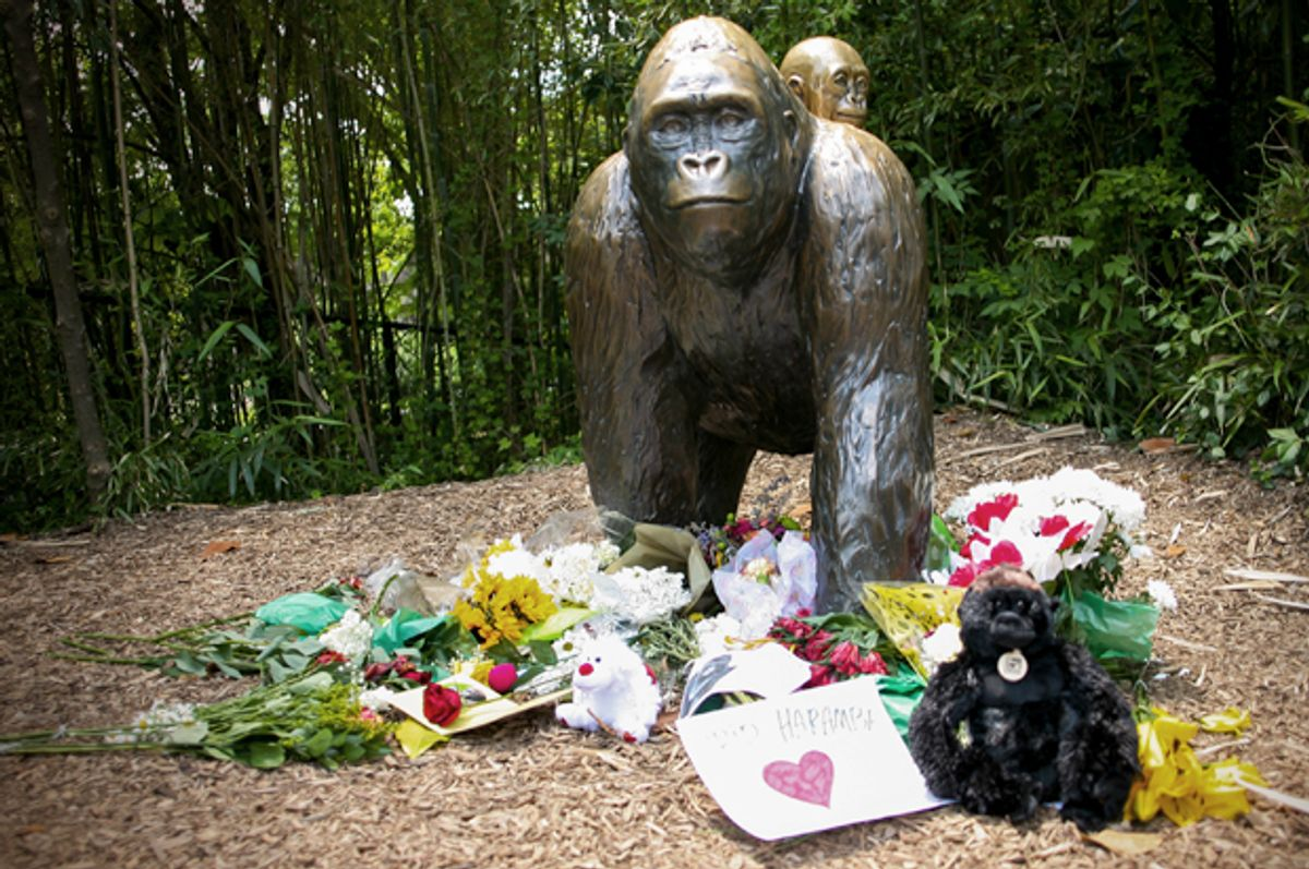 Flowers lay around a bronze statue of a gorilla and her baby at the Cincinnati Zoo, May 30, 2016.    (Reuters/William Philpott)