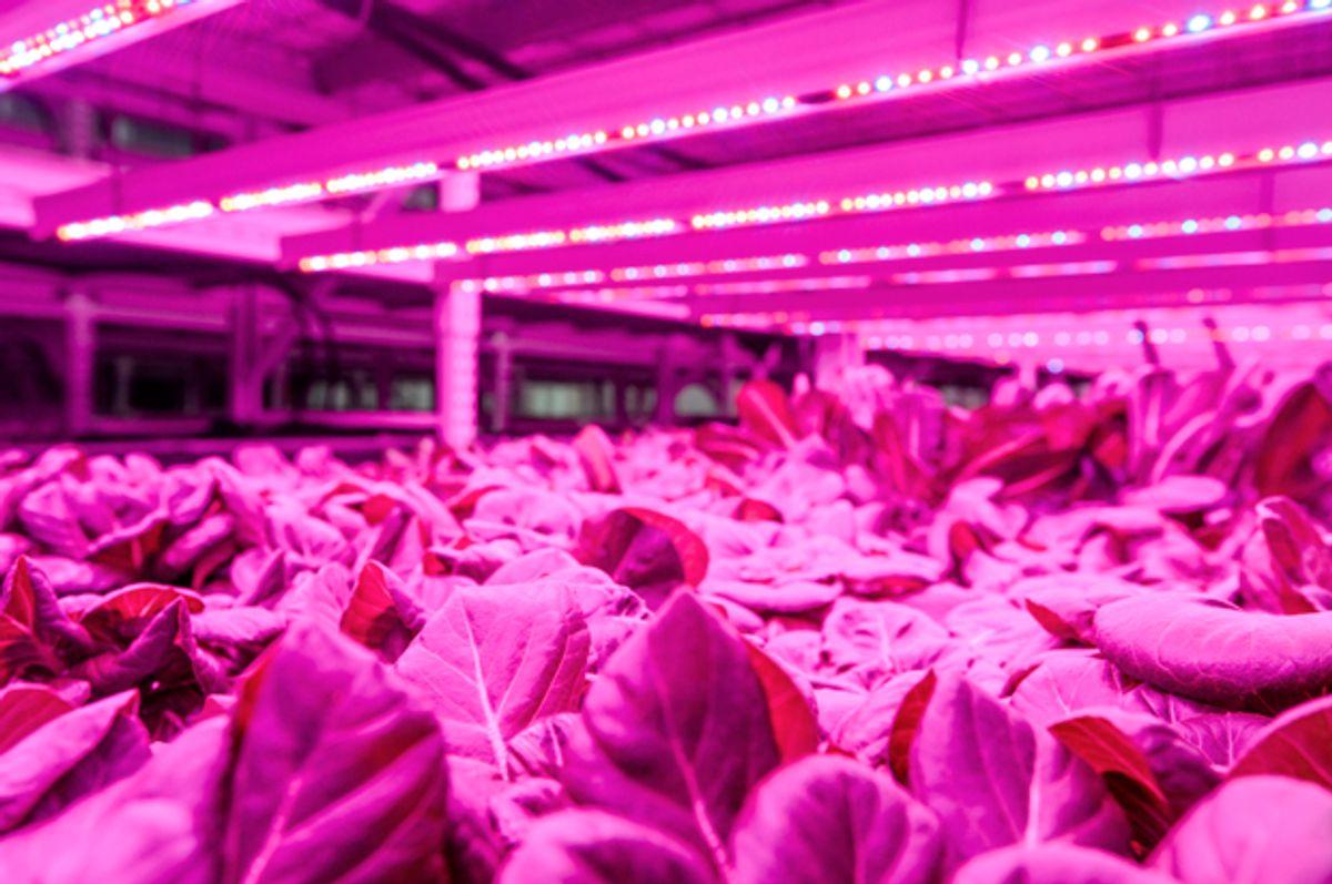 (Green Sense Farms/Travis Anderson)