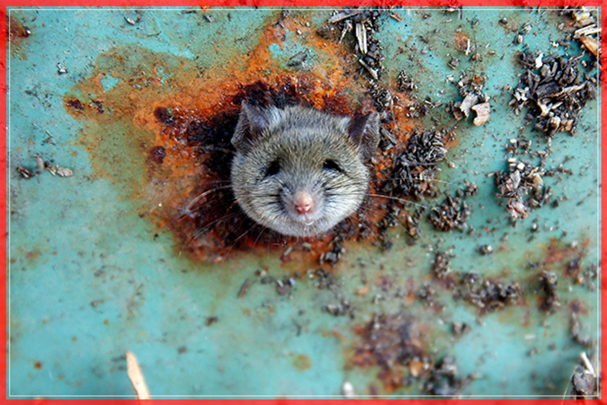 A rat's head rests as it is constricted in an opening in the bottom of a garbage can in the Brooklyn borough of New York, U.S., October 18, 2016.  REUTERS/Lucas Jackson      TPX IMAGES OF THE DAY      - RTX2PDUG (Reuters)