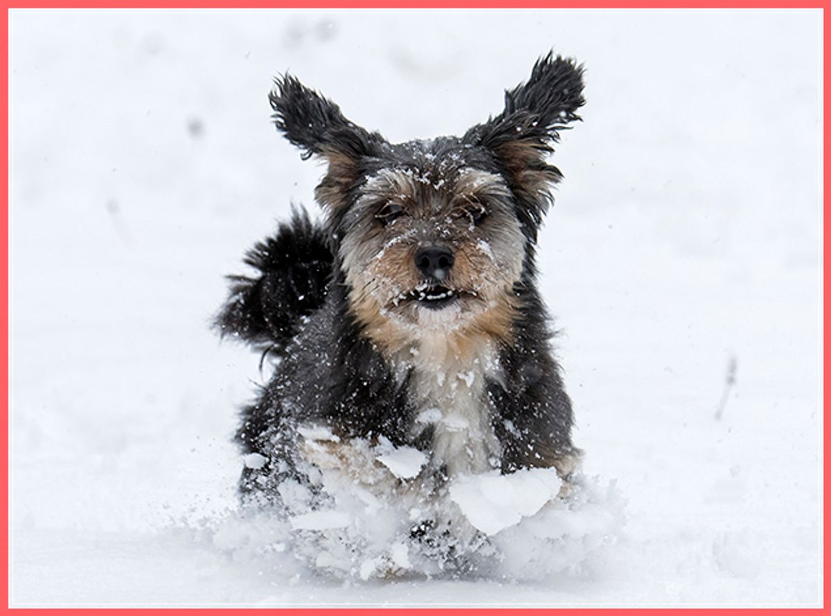 A dog runs in the freshly fallen snow in the Thuringian Forest near in Oberhof, Germany, Monday, Nov. 7, 2016. Large parts of Germany were hit by heavy rain and snowfalls. (AP Photo/Jens Meyer) (AP)
