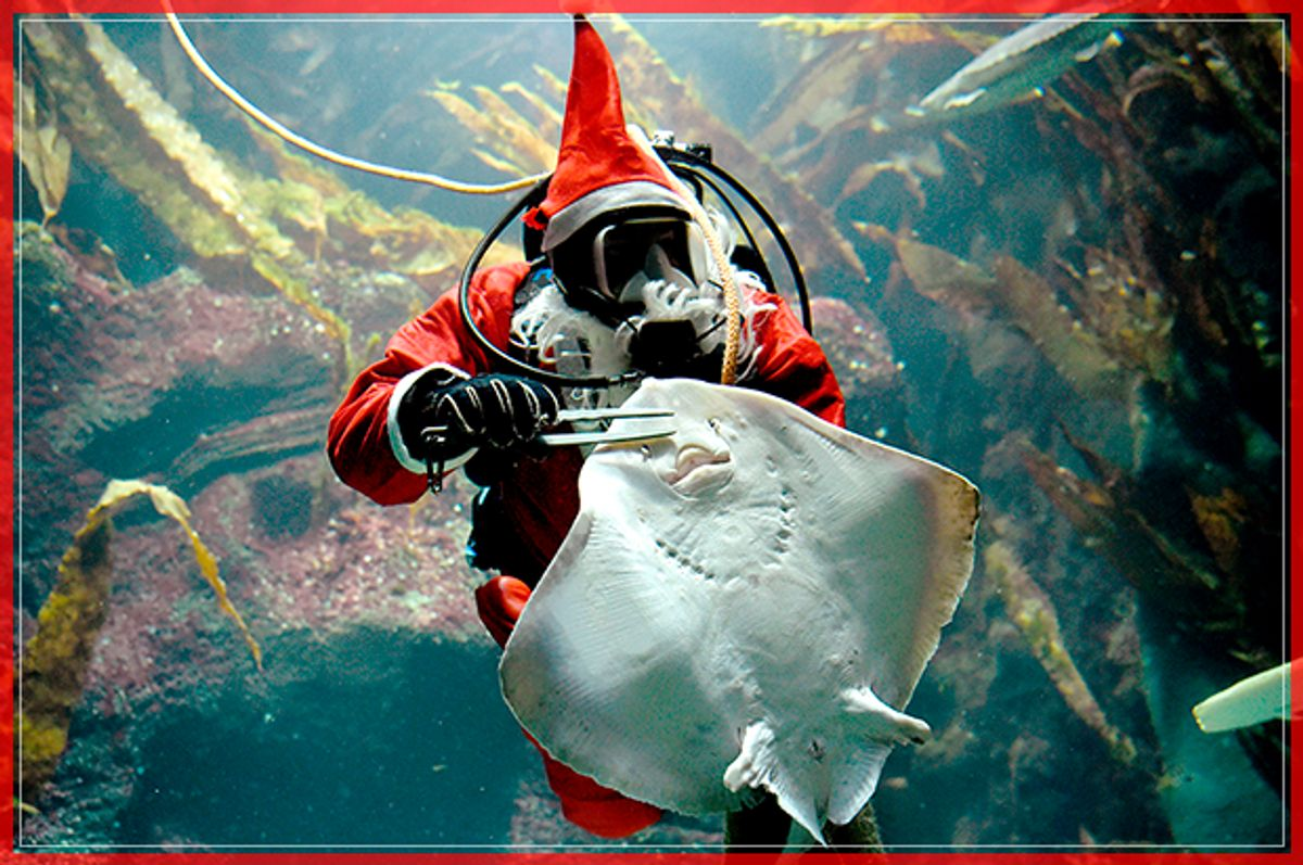 A diver in a Santa Claus costume feeds a ray at the Multimar Wattforum aquarium in Toenning, northwestern Germany, on December 2, 2016. / AFP / dpa / Carsten Rehder / Germany OUT        (Photo credit should read CARSTEN REHDER/AFP/Getty Images) (Afp/getty Images)