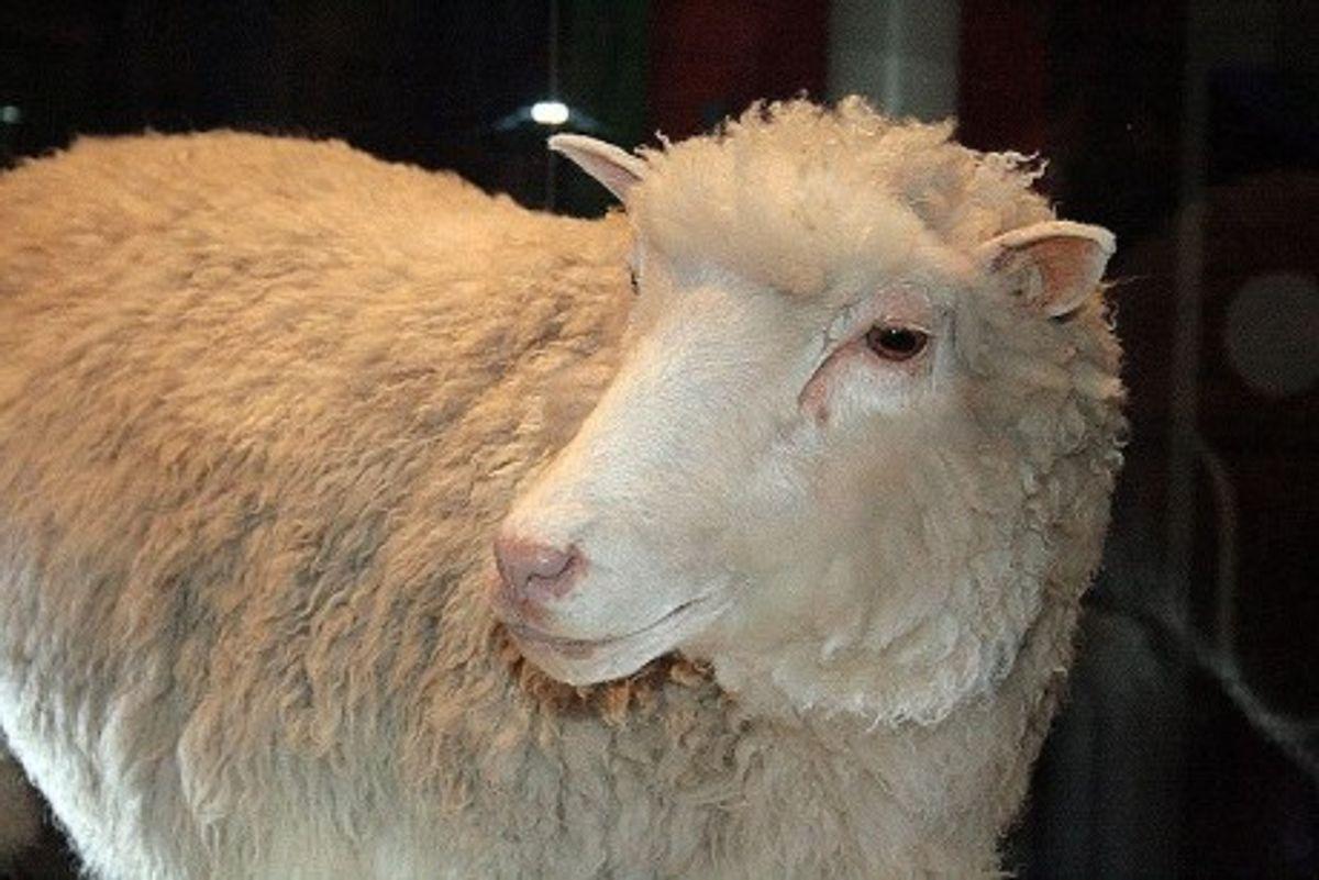 (Wikimedia/Hello! Dolly)