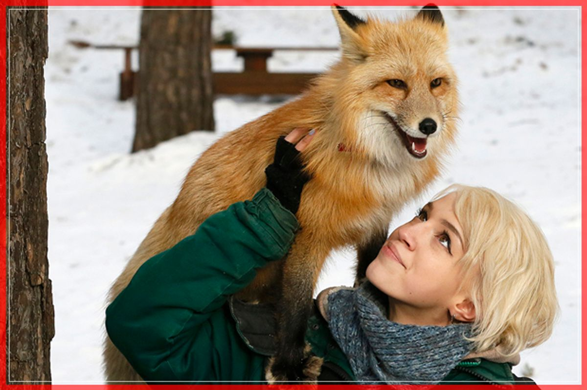 Zoo employee Vlada Zapolskaya walks with Ralf, an 11-month-old red fox, during a training session which is a part of a programme of taming wild animals for research and interaction with visitors at the Royev Ruchey Zoo in Krasnoyarsk, Siberia, Russia February 8, 2017. Ralf was born at the Institute of Cytology and Genetics (ICG) in Novosibirsk, which experimented on fox domestication through long-term selection and breeding for more than 50 years, according to zoo representatives. REUTERS/Ilya Naymushin - RTX305ZW (Reuters)