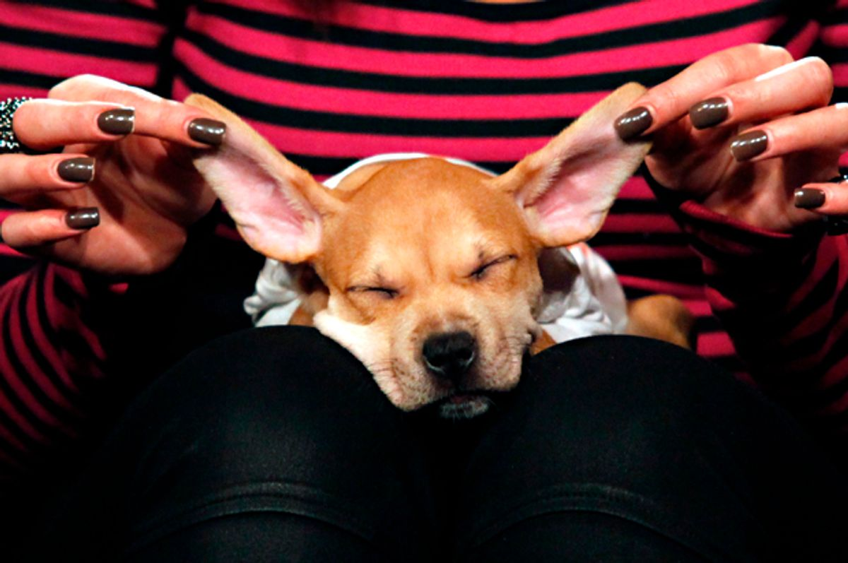 A Puppy Bowl VIII participant   (Getty/Cindy Ord)