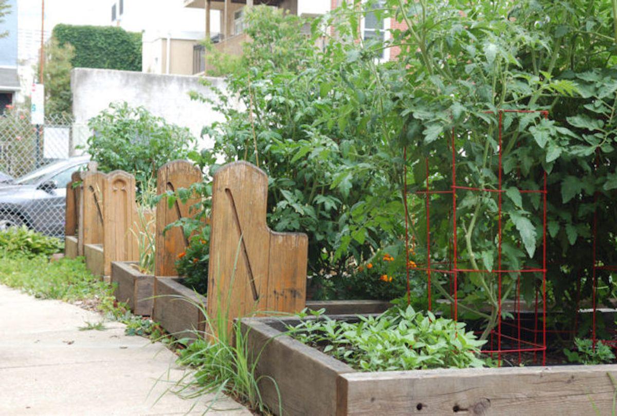 Planter beds in the UBC Garden of Eden.  (Photo courtesy Karen Chernick / Civil Eats)